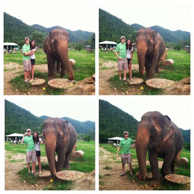 elephant photo bomb